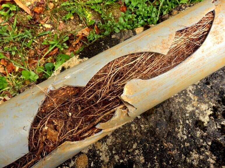 Tree Roots in Sewer Line-National Economy Plumbers New Orleans